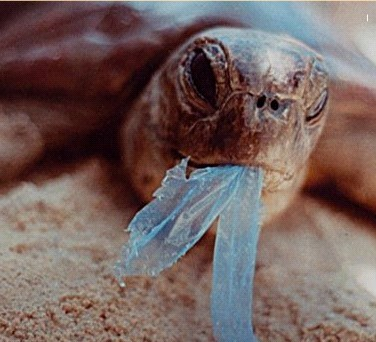 tartaruga-plastico.jpg